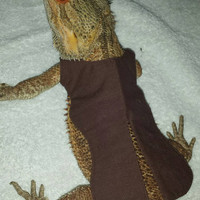 Tailcoat for a Bearded Dragon