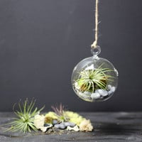 DIY HANGING AIR PLANT TERRARIUM KIT