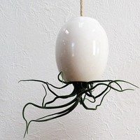 Hanging AirPlant Pod tm Gorgeous Glossy White by mudpuppy on Etsy