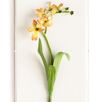 Original Painted Freesia Study - Tommy Mitchell