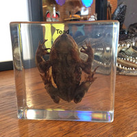 Toad Paperweight