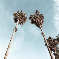 Palm Trees on Melrose Ave in LA