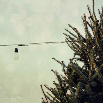 tree, nature, pine, light, teal, fine art photography