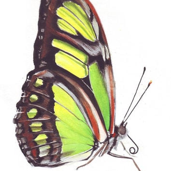 HM098 Original painting watercolor art Malachite Butterfly up close by Helga McLeod
