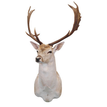 Noble Buck Mount Wall Decal