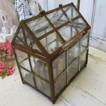 Large display showcase observation box rusty glass metal French Nordic inspired home decor piece Anita Spero
