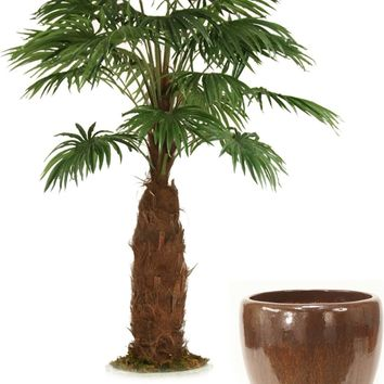 8' Fan Palm Tree In Glazed Mocha Stoneware Pot