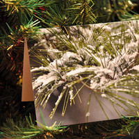 Unique holiday cards, beautiful Christmas cards, snow on pine, very high quality, pack of 5, envelopes included