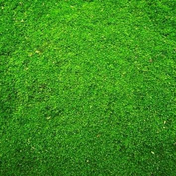 Green Grass Candy Floor Backdrop - 4x5 - LCCF9403 - LAST CALL