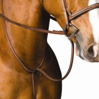 Collegiate Raised Standing Martingale - Breastplates & Martingales - For the Horse