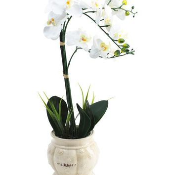 Faux Orchid in Ceramic Pot