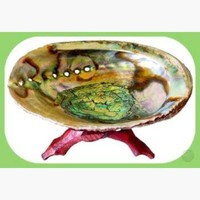 Abalone Shell Incense Burner with Stand