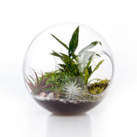 Double Exposure Terrarium