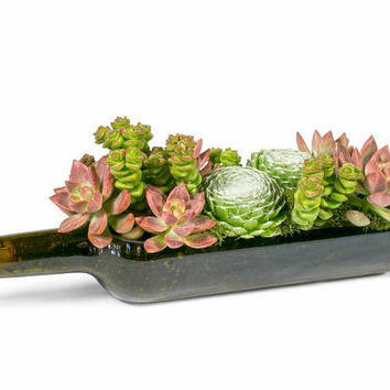 Thanksgiving Decor // Wine Bottle Succulent garden Planter Kit