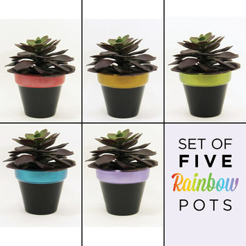 Flower Pots, Planter Set, Terracotta Pots, Succulent Planter, Air Plant Holder, Plant Pot, Succulent Pot, Indoor Planter, Rainbow - Set of 5
