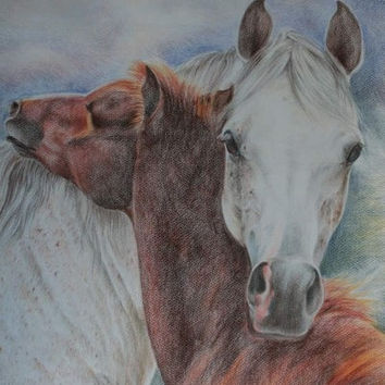 CUSTOM HORSE PORTRAIT, Pastel drawing from photos, Equestrian Art on request, Horse head, Equine Art, Coloured pencils, Horse memorial