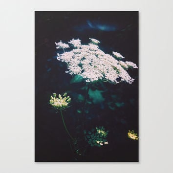 Anne's Lace Canvas Print by DuckyB (Brandi)