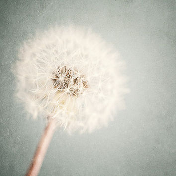 Soft Pastel Nature Photography, Dandelion Art Print, 8x10, Girls Room Art, Bedroom Decor, Nursery Decor, Pastel Blue, Cream.