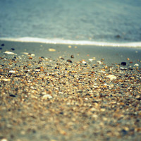 "Beach House Art - Beach Photography - Seashells Along the Shore - Seascape  - Beach Home Decor  - 8""x10"" Print"