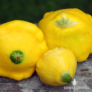 Yellow Scallop Patty Pan Bush Summer Squash Heirloom Seeds - Non-GMO, Open Pollinated, Untreated