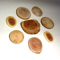 Wood discs slices. Handmade jewelry findings, collection of wood jewelry supplies. Assorted mixed natural wood. Jewelry supply accessories.