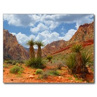 Cactus Spring Red Rock Canyon NV Postcard