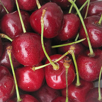 Cherry Sweet, Black Gold ™ PP17301 - Fruit Plants at Burpee.com