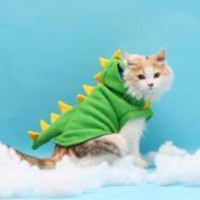 Dinosaur Costume For Cats