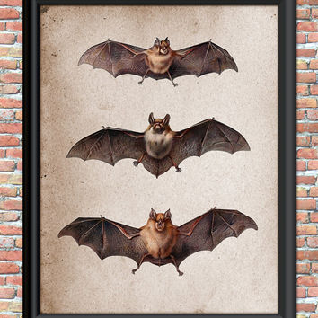 Bat Art Print Wall Decor Vintage Bats Primitive Style Grunge Steampunk Home Wall Decor Printable Art Mammals Flying Halloween Antique Print