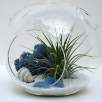 Beach Terrarium, White Sands, Air Plant Terrarium Kit, Blue and White Hanging Terrarium with Tillandsia, Great Beach House Gift
