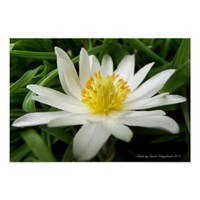 Beautiful Nature Photo of White Wildflower Poster