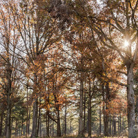 Fall Colors by Andrea Anderegg Photography