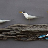 Little Tern with Mackerel - Gallery Q