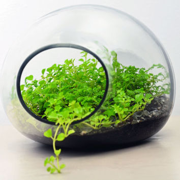 Bubble Terrarium // Home Decor // Green Gift