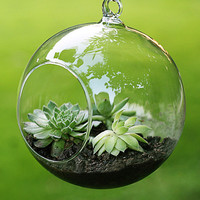 Fashion Transparent Clear Glass Round Terrarium Flower Plant Stand Hanging Vase Hydroponic Home Office Wedding Garden Decor F1