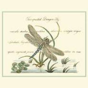 Antique Dragonfly II