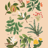 Herbs & Spices Print