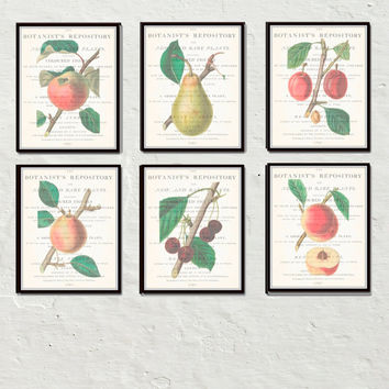 Vintage Fruit Collage Botanical Print Set No.1