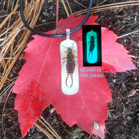 Real Bug Jewelry, Pincher Earwig Taxidermy Nature Necklace, Glow in the Dark
