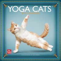 Yoga Cats 2013 Square 12X12 Wall Calendar (Multilingual Edition)