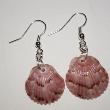 Sterling Silver, Natural Calico Scallop SeaShell earrings, handcrafted, one of a kind accent jewelry
