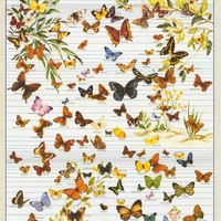 Butterflies Lepidoptera Insect Education Poster 27x39