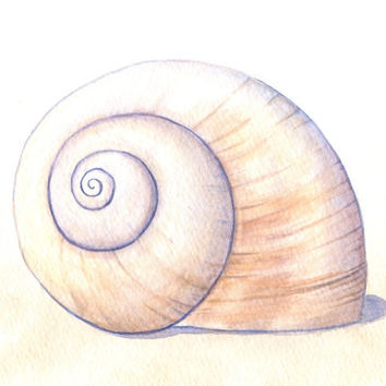 "Seashell Painting, Moon Snail Shell Art, Beach House Decor, Original Watercolor Painting, Sea Shell Art, Neutral, Brown, Watercolor 8"" X 10"""