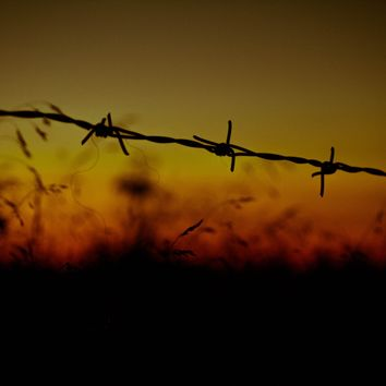 Barbed Wire Photograph Art Print