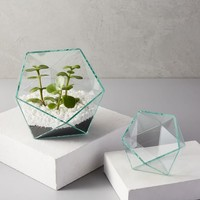 Prism Geo Glass Terrariums