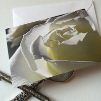 White rose of Oregon greeting card blank inside, flower photography note card blank inside, 4x6 white card. stock lane studio, wanderlust