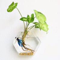 Creative Hanging Glass Planter Vase Terrarium Container Home Garden Wall Decor