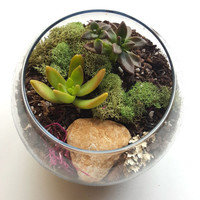DIY Terrarium Kit, gift ideas,Succulent Terrarium, Glass Terrarium, Miniature Garden, Home & Garden, DIY Gifts, Christmas gift