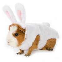 All Living Things® Small Pet Bunny