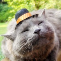 Top Hat for Cats Harvest Warm Joy by ToScarboroughFair on Etsy